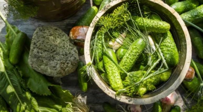 Малосольные огурцы — 6 рецептов малосольных огурчиков быстрого приготовления