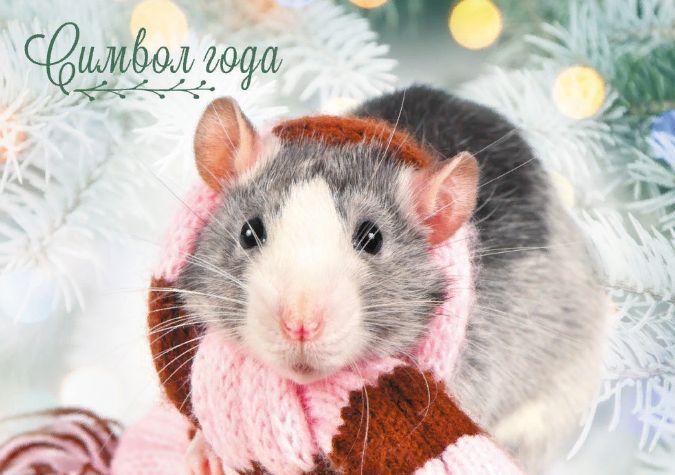Новый год 2020 как встречать и что готовить. В чем встречать год крысы и в каком цвете